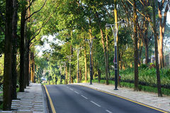 Road. A small road leading downhill on a sunny morning royalty free stock photos