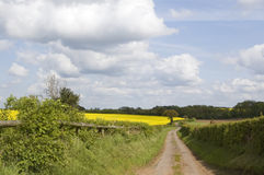 Road. A road through the fields in Shropshire, England stock photos
