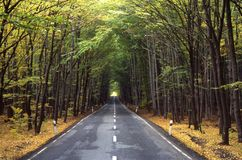 A road. Throught a forest Stock Photo