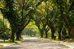 Road. Paved road canopied by trees Royalty Free Stock Image