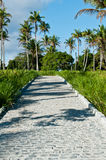 The road. Brick road surrounded by palm trees Royalty Free Stock Photos
