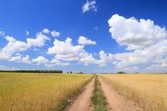 Road among Stock Photography