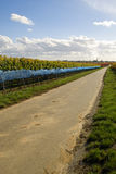 Road. Between the rows of ice wine grapes, Germany Stock Image
