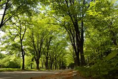 Road. To shades of branches of trees Royalty Free Stock Images