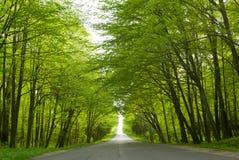 Road. Royalty Free Stock Photo