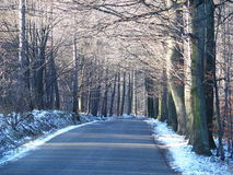 Road in abandoned forest in winter. Road drive in abandoned forest avenue with two rows of trees sides in Beskid Mountains near city of Bielsko-Biala in Poland Royalty Free Stock Photos