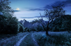 Road through the abandoned orchard in mountains at night. Road through the abandoned orchard in mountains. Composite image of High Tatra ridge. beautiful summer Stock Image