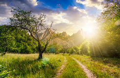 Road through the abandoned orchard in mountains at sunset. Road through the abandoned orchard in mountains. Composite image of High Tatra ridge. beautiful summer Royalty Free Stock Photo
