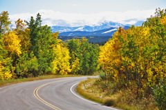 The road abruptly turns among trees Royalty Free Stock Photo