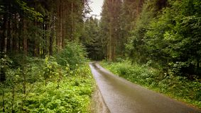 Road flanked by woods Royalty Free Stock Image