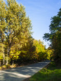 A road across a forest at autumn. In Spain Stock Image