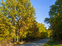 A road across a forest at autumn. In Spain Stock Photo