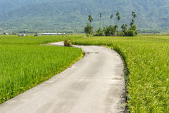 Road across the paddy farm Royalty Free Stock Photo