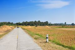 Road across rice fields after harvest Royalty Free Stock Photo