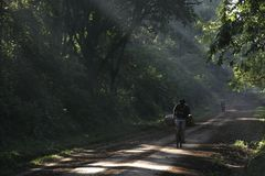 Road in Africa. Dirt road through rainforest in africa Royalty Free Stock Images