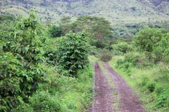 Road in african savanna Royalty Free Stock Images