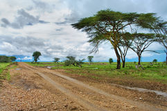 road in the African savannah Royalty Free Stock Photo