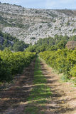 Road. Agricultural road amongst orange groves Royalty Free Stock Photo