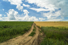 Road on an agricultural field separating two crops one green sun. Flower and one yellow wheat Stock Photo