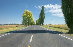 Road ahead lined with green and gold trees Stock Photos