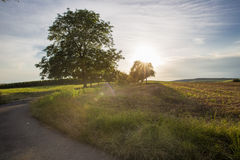 Road along the beveled field and vineyard in the background Royalty Free Stock Photo