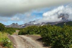 Road along dry river to Avachinskaya group Volcano on Kamchatka Peninsula Stock Photo