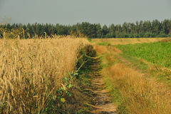 The road along the field Royalty Free Stock Image