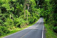 Road along forest at Khao Yai national park, Thail Stock Photos