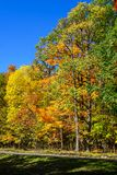 Road along golden maple trees leaves at Saint-Bruno Park. Saint-Bruno Park, near Montreal, has many maple trees along the trails and many beautiful colours to royalty free stock photo