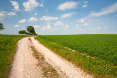 Road along lucerne field Royalty Free Stock Photography