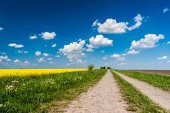 Road along the rapeseed field royalty free stock images