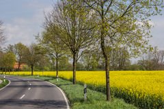 Road along a rapeseed field Royalty Free Stock Photo
