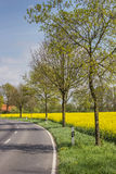 Road along a rapeseed field Stock Photo
