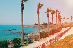 The road along the rocky sea coast with palm trees, shrub and grasses on a Sunny day. The horizontal frame. Royalty Free Stock Photos