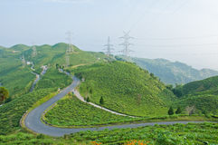 Road along tea plantation on the mountain Stock Photo