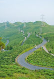 Road along tea plantation on the mountain Stock Photography