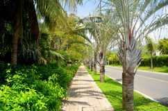 The road along the Yalong Bay, China, Sanya Royalty Free Stock Photo