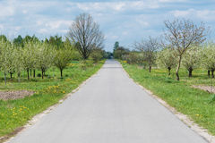 Road alongside orchard trees Royalty Free Stock Photo