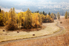 Road among the Altai Mountains. autumn Stock Photos