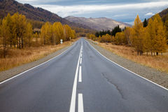 Road among the Altai Mountains. autumn Royalty Free Stock Images