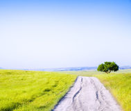 Road amongst green meadow Stock Photography