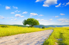 Road amongst green meadow Stock Photo