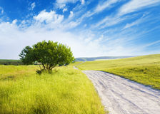 Road amongst green meadow Stock Photos