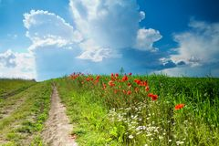 Road amongst poppies Royalty Free Stock Photos