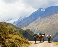 On the road in Andes Stock Photography