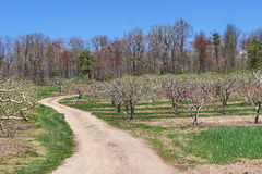 Road Through Apple Orchard Stock Photo