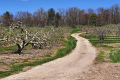 Road Through Apple Orchard Royalty Free Stock Photos