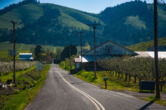 Road among apple orchards, Hood River Valley, Oregon. Paved road among blooming apple orchards in Hood River Valley, Oregon stock photography