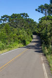 Road and Araucaria angustifolia Forest Stock Photo