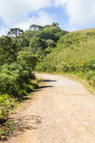 Road and Araucaria angustifolia Forest Royalty Free Stock Photos